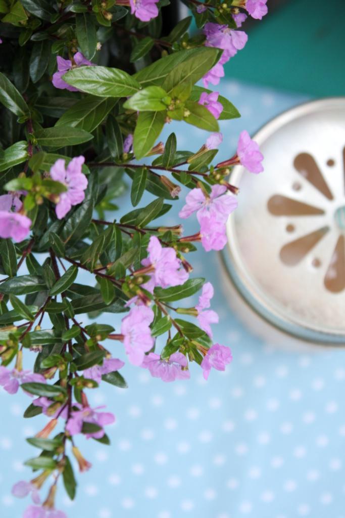 Iced Vanilla Chai Latte 8
