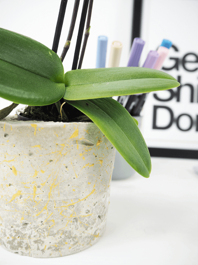 pflanzentopf aus beton selbermachen rosy grey diy blog. Black Bedroom Furniture Sets. Home Design Ideas
